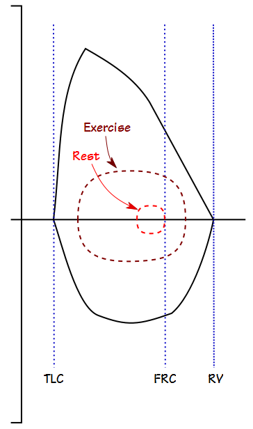 Exercise_FVL_Normal
