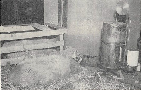 Spirometer_Benedict_Roth_Collins_1948_Sheep