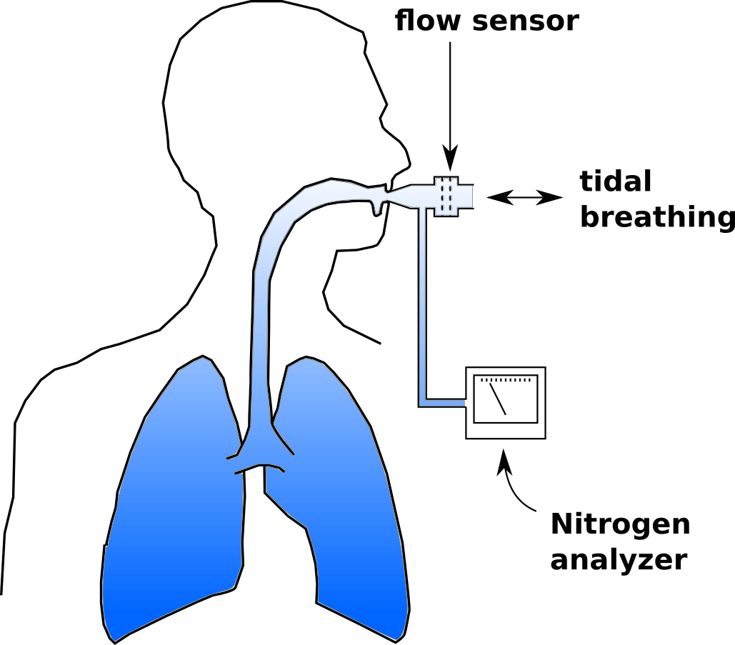 Multi Breath Nitrogen Washout Pftblog Exhaling Diagram Breathing Or Ventilation Once This Happens Tidal Volume Is Measured Continuously And Used To Determine The Cumulative Exhaled Also